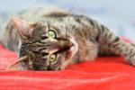 Учёные: кошки способны предсказывать события по акустическим волнам