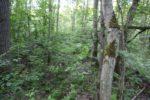 Германия: В лесу найдены останки девочки, пропавшей 15 лет назад