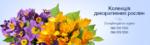 Покупка и выращивание цветов