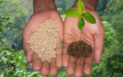 Комплексные удобрения — «И выросла репка большая-пребольшая»