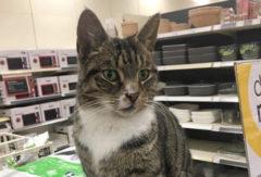 Поселившийся в британском магазине кот прославился в сети