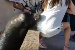 Спасенной от морского льва девочке прописали антибиотики