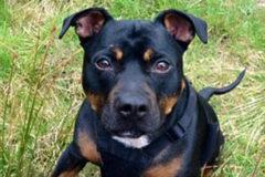В Шотландии пес выжил после падения с 30-метровой высоты