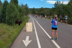 Дикий медведь присоединился к массовому забегу в Колорадо