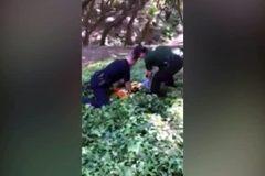 Полицейские в Калифорнии спасли застрявшего головой в кувшине медвежонка