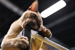 В Нижнем Новгороде коту предложили работу с окладом 20 тысяч рублей