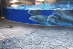 Белочка поразила дельфинов во флоридском океанариуме