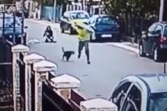 Уличный пес спас женщину от грабителя