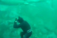 Встречу огромной акулы и рассеянного аквалангиста сняли на видео