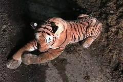 Противостояние трезвого шотландца и тигра закончилось позором