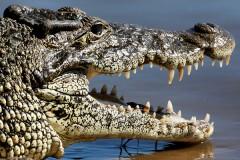 Отсутствие протестов против крокодила-людоеда обрадовало власти