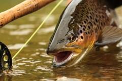 «Прицел» интернет-магазин товаров для рыбной ловли, охоты