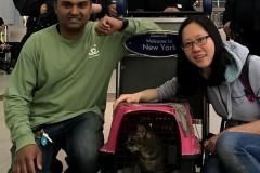 Беглая кошка больше недели скрывалась от полиции в аэропорту Нью-Йорка