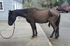Конь потребовал от хозяина 100 тысяч долларов за страдания