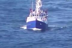 Акула укусила поймавшего ее рыбака