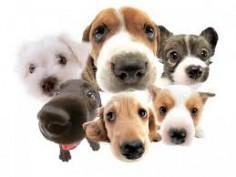 Лечение домашних питомцев – прерогатива опытного ветеринара