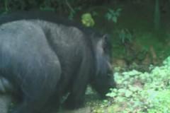 Опубликованы редкие кадры с самыми толстыми свиньями в мире