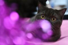 Россиянин продаст кота-экстрасенса за пять миллионов рублей