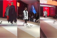 Бездомная кошка научила моделей ходить по подиуму во время показа