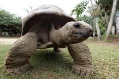 На Галапагосах похитили более сотни гигантских черепах