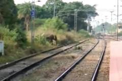 Буйный слон загнал людей на крыши и остановил поезд