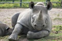 Ребенок упал в клетку с носорогами и чудом остался в живых
