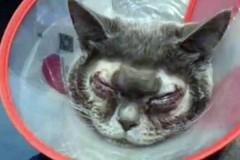 Хозяйка отправила «уродливого» кота на пластику и попала под шквал критики