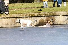 Женщина рискнула жизнью ради спасения тонущей собаки