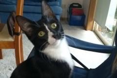Котенок выжил после получасовой стирки в машинке