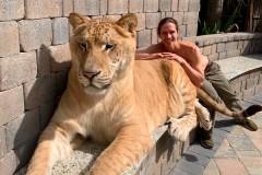 Мужчина прогулялся с «самой большой кошкой в мире» и попал на видео