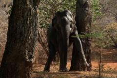 Дикие слоны догнали спортсменов и побили хоботом