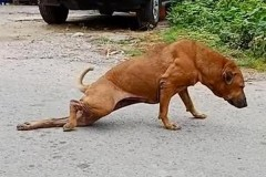 Собака нашла хитрый способ выпрашивать еду у прохожих и прославилась