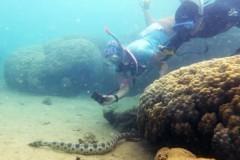 Пенсионерки обнаружили больше сотни смертоносных подводных змей