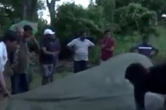 Катавшего туристов слона довели до смерти от усталости