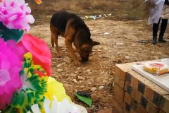 Верный пес попытался достать хозяина из могилы и отказывался его покидать