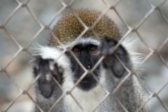 Десятки животных сгорели заживо в зоопарке из-за новогодних фонарей