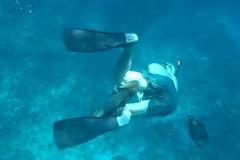 Нападение агрессивной рыбы на дайверов попало на видео