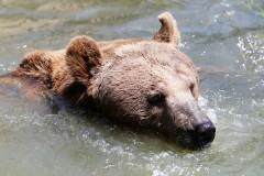Тысячи людей вступились за приговоренного к смерти медведя