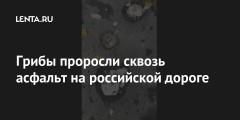 Грибы проросли сквозь асфальт на российской дороге