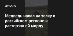 Медведь напал на телку в российском регионе и растерзал ей морду