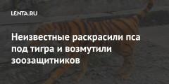 Неизвестные раскрасили пса под тигра и возмутили зоозащитников