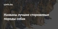 Названы лучшие сторожевые породы собак