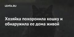 Хозяйка похоронила кошку и обнаружила ее дома живой