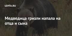 Медведица гризли напала на отца и сына
