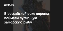 В российской реке вороны поймали пугающую заморскую рыбу