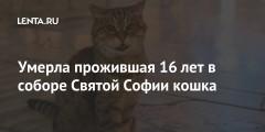 Умерла прожившая 16 лет в соборе Святой Софии кошка