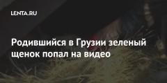 Родившийся в Грузии зеленый щенок попал на видео