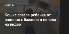 Кошка спасла ребенка от падения с балкона и попала на видео