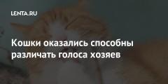 Кошки оказались способны различать голоса хозяев