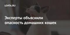 Эксперты объяснили опасность домашних кошек